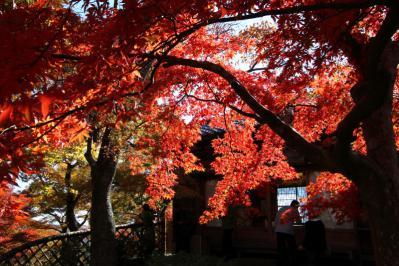 箱根美術館紅葉b_1_2