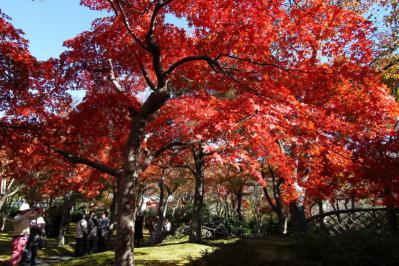 箱根美術館紅葉c_2