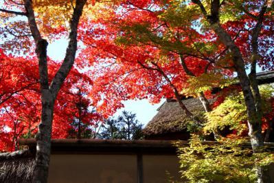 箱根美術館紅葉d_1