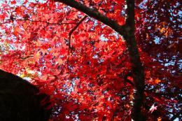 箱根美術館紅葉z2_1