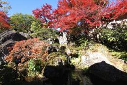 箱根美術館紅葉t_1