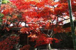 箱根美術館紅葉z4_1