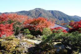 箱根美術館紅葉z1_1