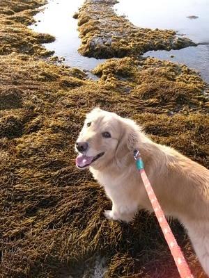 海藻の絨毯の上
