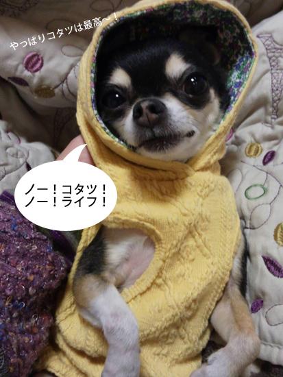 コタツ登場2