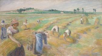 ピサロ収穫