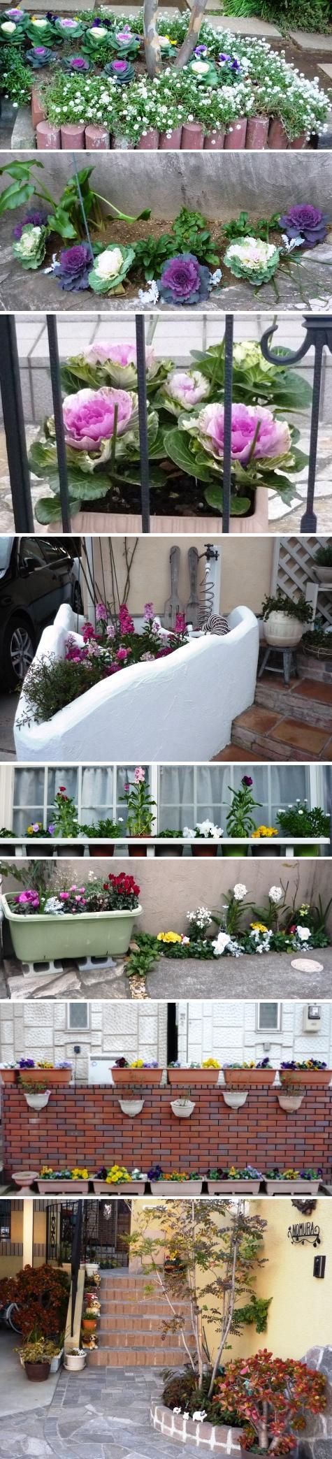 a千葉の庭花P1290085