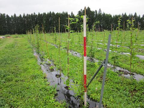 ヒデコ畑1
