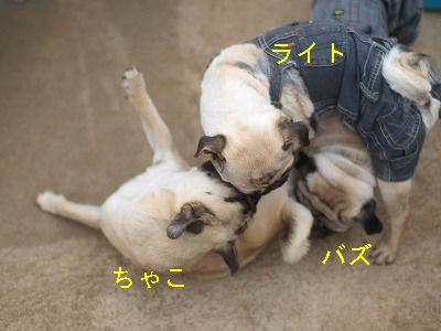 s-2011_06050069.jpg
