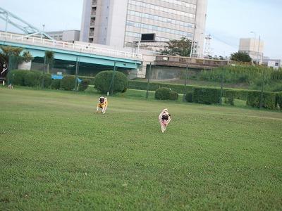 s-2011_08090061.jpg