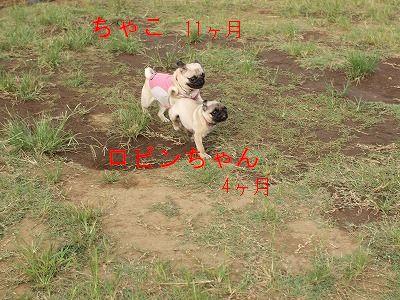 s-2011_08160012.jpg
