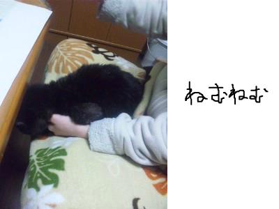 snap_himehitokoe_20123620122.jpg