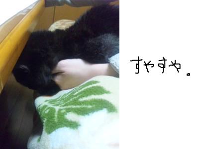 snap_himehitokoe_20123620440.jpg