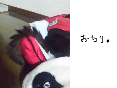 snap_himehitokoe_201236204426.jpg