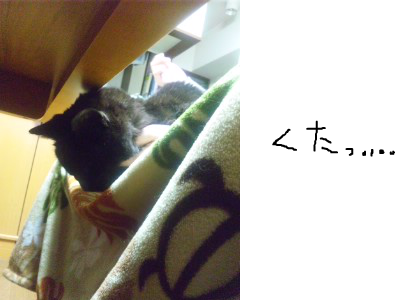 snap_himehitokoe_20123620717.jpg