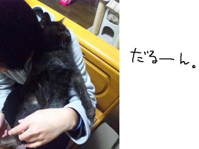 snap_himehitokoe_201241203525.jpg