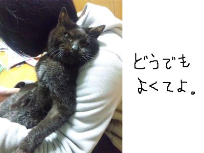snap_himehitokoe_201241204827.jpg