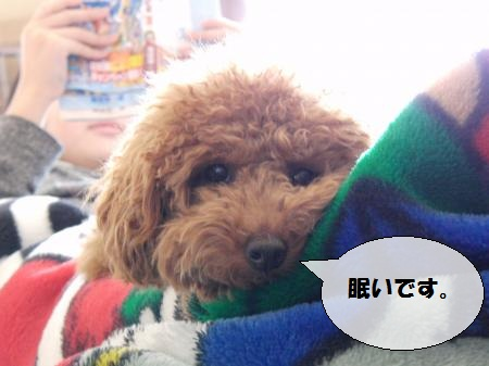 CIMG5279_convert_20110205203407-1