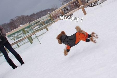 IMGP0337-cropあ