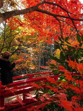 2012_1125紅葉の森へ0261b