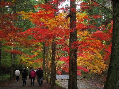 2012_1125紅葉の森へ0086