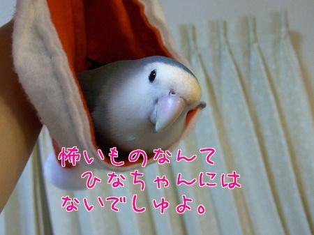 111218_4.jpg
