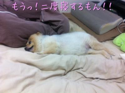 もうっ!二度寝するもん!!