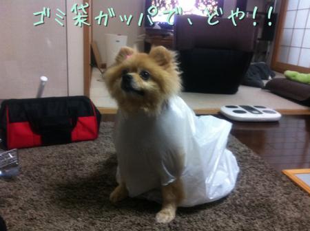 ゴミ袋de雨ガッパで、どや!!