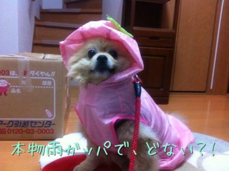 本物雨ガッパで、どや!!