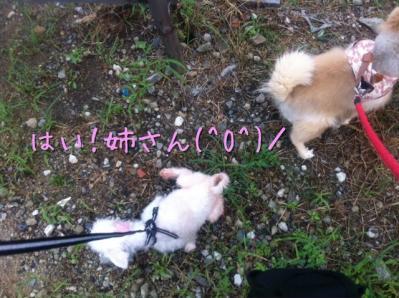 はい!姉さん(^O^)/