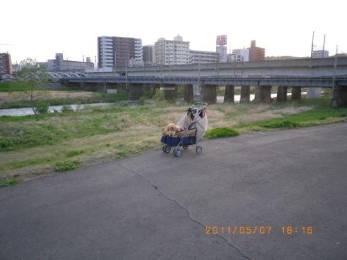 2011ゴールデンウィーク 広瀬川①