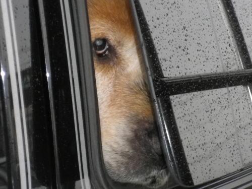 2011.6.18(土)車窓から覗くラヴィン
