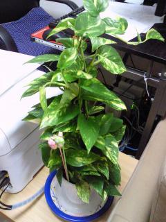 観葉植物1-2