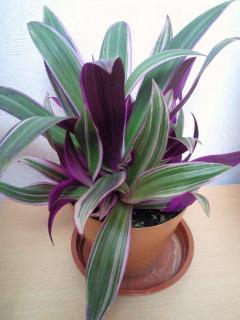 観葉植物2-2