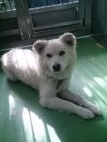 阿賀北迷い犬3