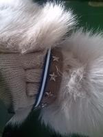 阿賀北迷い犬首輪