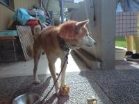 青山迷い犬ボール