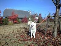 阿賀北迷い犬