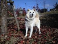 迷い犬白犬