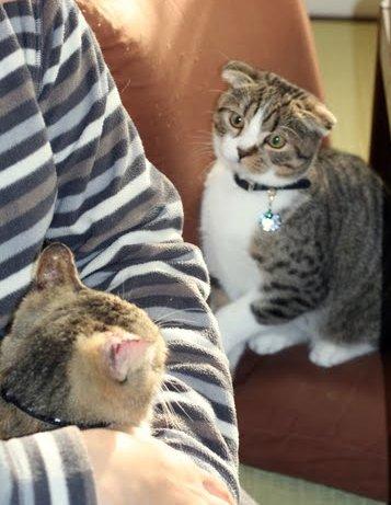 猫パンチしたいのに…