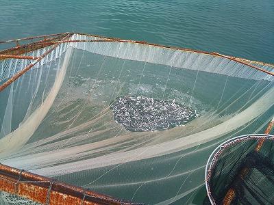 すくい網漁 (9)