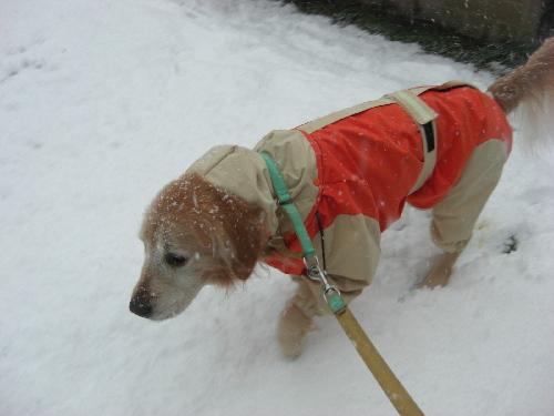 レオ23日雪1
