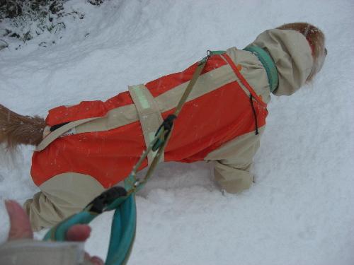 レオ23日雪3