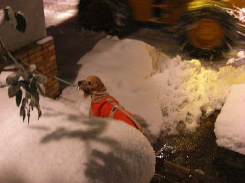 レオ24日雪1
