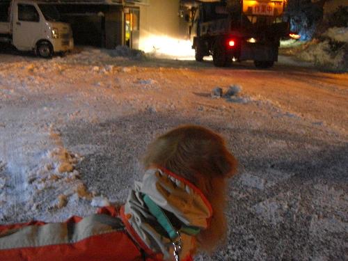 レオ24日雪2