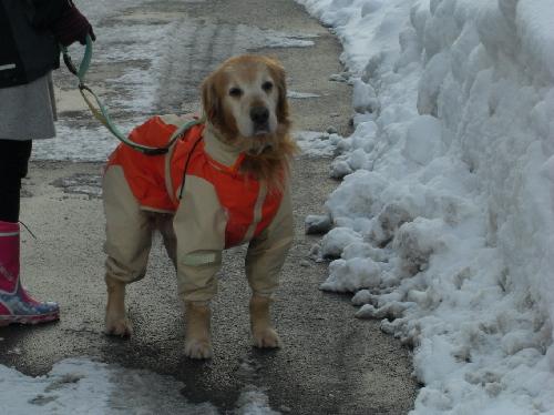 レオ雪散歩3