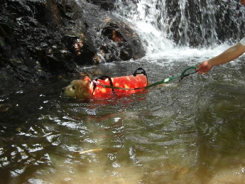 レオ泳ぎ2