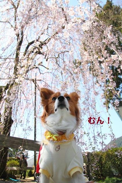 21_20120505220613.jpg