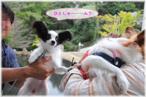 28_20121018113022.jpg