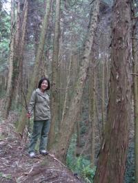 kagoshimanoharu
